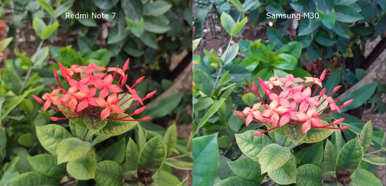 Redmi Note 7 Pro vs Samsung M30 Camera Sample