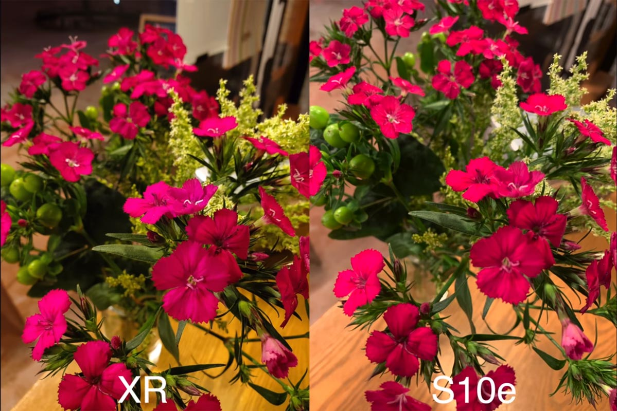 iPhone XR vs S10e Camera Sample Flower