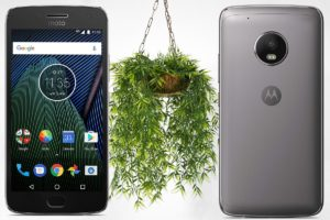 Moto G5 with Hanging Plant Background