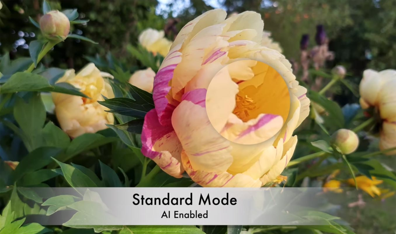 Motorola One Vision Flower AI Camera test